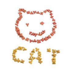 Free Cat`s Muzzle Stock Photo - 9359440