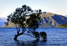 Free Lone Tree Lake Wanaka. NZ Royalty Free Stock Photo - 93548855