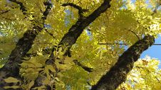 Free Yellow Yellow Yellow 20151004_141917 Stock Photo - 93549050