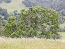 Free Plant, Plant Community, Natural Landscape, Tree Stock Photography - 93549272