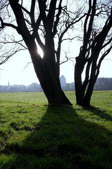 Free Treelights Stock Photo - 93551590