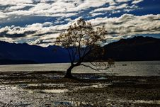 Free The Most Photographed Tree In New Zealand. Stock Photos - 93552013