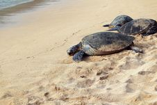 Free Three Sea Turtle Heading To The Sea During Daytime Royalty Free Stock Images - 93553409