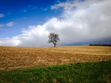 Free Tree On An Acre Royalty Free Stock Photo - 93553495