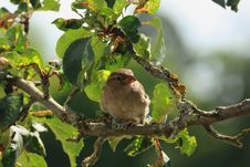Free Brown Bird On Tree Branch During Daytime Royalty Free Stock Photos - 93554338