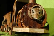 Free Brown Squirrel Inside Of Brown Wooden Train Miniature Stock Photography - 93554592