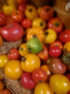 Free Riped And Unriped Tomatoes Stock Images - 93555884