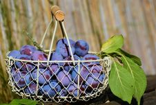 Free Basket Of Plums Royalty Free Stock Image - 93555916