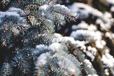 Free Green Pine Tree With Snow Stock Image - 93556491