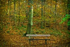 Free Bench In Park During Autumn Royalty Free Stock Photos - 93557358