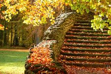 Free Autumn Leaves On Old Stairs Royalty Free Stock Image - 93557856