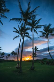Free Silhouette Palm Trees On Beach During Sunset Stock Images - 93558504