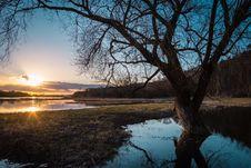 Free Leafless Tree On Lake Coast At Sunset Stock Images - 93558924