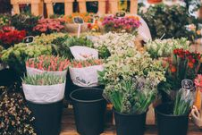Free Tulips And Other Flowers In Shop Stock Photo - 93559060