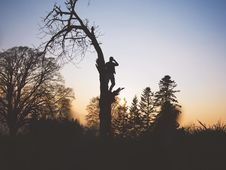 Free Man Looking Out From Half Way Up A Tree Stock Photo - 93559360