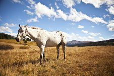Free Horse In Field Stock Images - 93559894