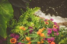 Free Colorful Flowers On Flower Bed Royalty Free Stock Photography - 93560197