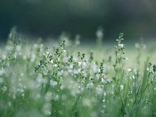Free Grasses On Meadow Royalty Free Stock Photos - 93560308