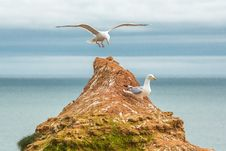 Free Seagull Landing On Islet Royalty Free Stock Photo - 93561055