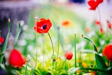 Free Colorful Flowers In Sunny Garden Stock Photo - 93561770