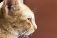 Free Ginger Cat Royalty Free Stock Images - 93561909