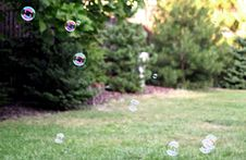Free Bubbles In Sunny Back Yard Royalty Free Stock Photos - 93563098