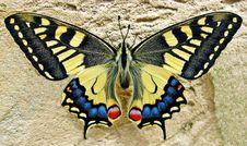 Free Butterfly, Moths And Butterflies, Insect, Invertebrate Stock Photography - 93563592