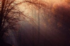 Free Atmosphere, Forest, Morning, Sunlight Royalty Free Stock Photos - 93564008