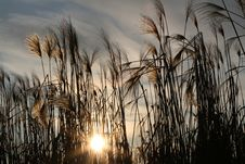 Free Reflection, Phragmites, Sky, Grass Family Royalty Free Stock Images - 93564039