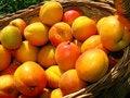 Free Apricot Stock Photo - 9362120