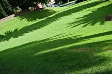 Free Shadows In The Park Royalty Free Stock Photo - 9360545