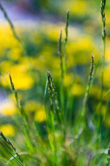 Free Grass Closeup Stock Images - 9362954