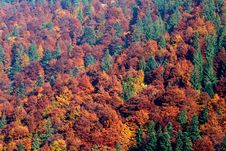 Free Forest Royalty Free Stock Image - 9364386
