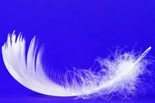 Free Feather Stock Images - 9365084