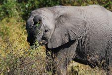 Free African Elephant Cub Stock Image - 9365711