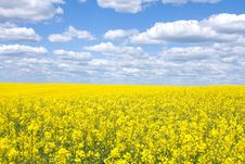 Free Rape Field Stock Photos - 9367123