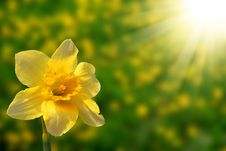 Free Narcissus Against The Sky Stock Images - 9367364
