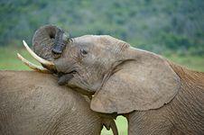 Free Elephant Games Royalty Free Stock Image - 9367386