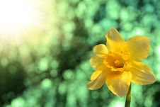 Free Narcissus Against The Sky Stock Image - 9367551