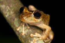 Free Frog Closeup Royalty Free Stock Photos - 9367648