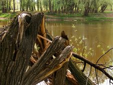 Free Tree Broken On The River Royalty Free Stock Image - 9368146