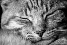 Free Portrait Of Sleeping Cat Royalty Free Stock Photo - 93682575