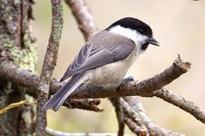 Free Close-up Of Bird Perching Outdoors Stock Images - 93682584