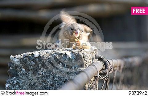 Free Bird Atacking To Eat Stock Photography - 9373942