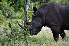 Free Rhino Stock Image - 9370471