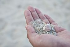 SeaShell Series 8 Royalty Free Stock Images