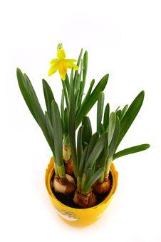 Free Yellow Spring Stock Image - 9371141