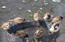 Free Sparrows Sit On An Urn. Royalty Free Stock Photo - 9374135