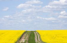 Free Rape Field Stock Image - 9374441