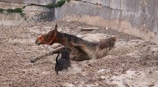 Free Horse And Dog Playfight Royalty Free Stock Image - 9375256